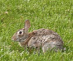 Rabbit Fantasia