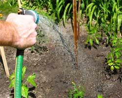 Steve, watering