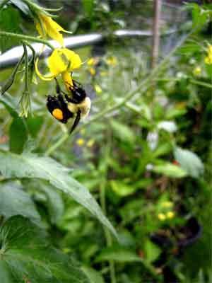 Bee persistent