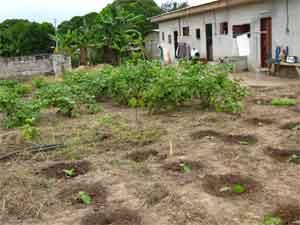 Gabon garden