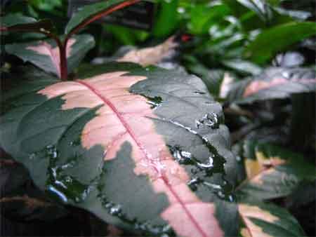Preppie Leaf