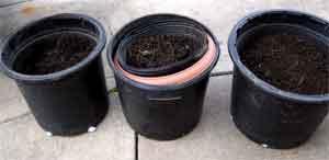 Compost pots