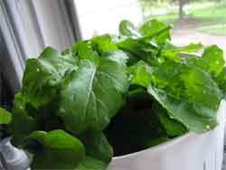 Pile o' lettuce