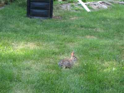 Rabbit upon return