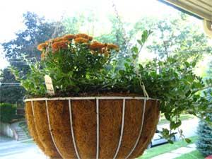 Hanging flowers backward