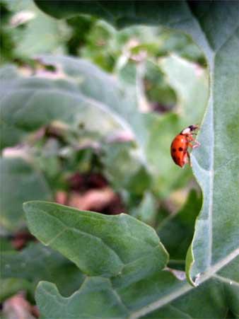 Halloween bug, climbing