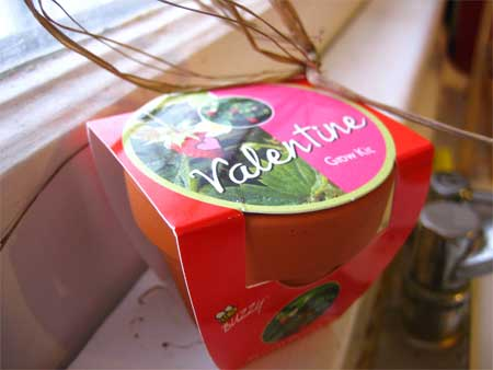 Valentine Grow Kit