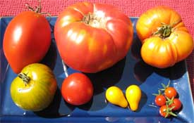 Heirloom Tomatoes (Yeah, I grew \'em myself)