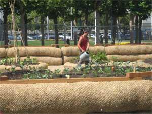 Victory gardener at work